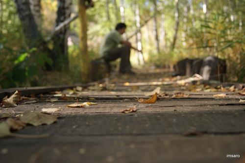 Осень. Лох. Новобурасский район. Саратовская область.