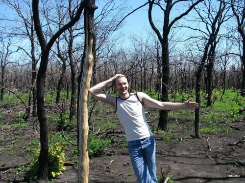 Следы лесного пожара. Саратовская область.