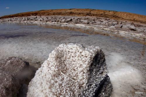 Дерево и соль. Природный парк Эльтонский. Озеро Эльтон. Палласовский район. Волгоградская область.
