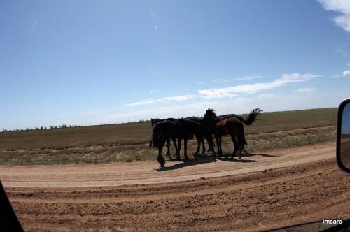 Лошади. Астраханская область.