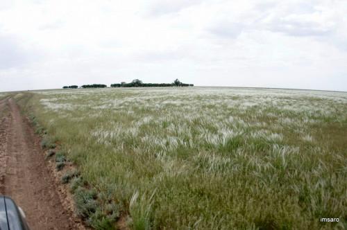 Астраханские степи. Астраханская область.