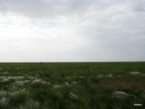 Журавль. Астраханские степи. Астраханская область.