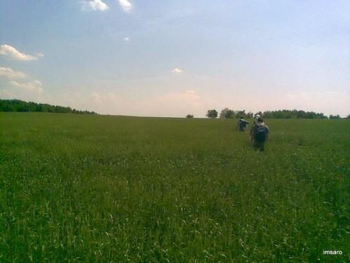 Поле. Ягодная поляна. Татищевский район. Саратовская область.